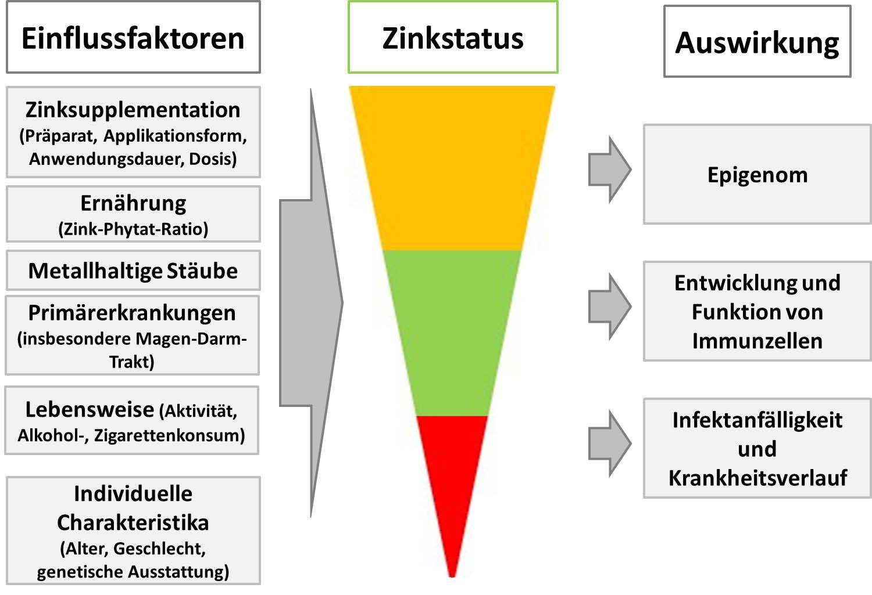 Ag Zink Und Entzündung Im Angeborenen Immunsystem