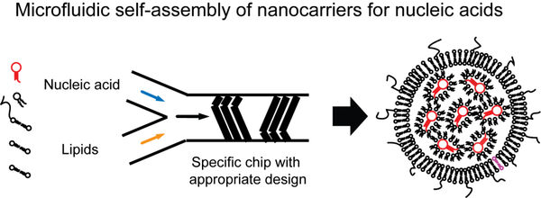 Figure 1: Self-assembly of lipid-based nanocarriers for nucleic acids using microfluidic technology. The microfluidic process occurs, compared to traditional methods to generate liposomes, extremely rapid and does require heating which is a big advantage to preserve the functionality of biological molecules, particularly RNA. Unpublished own figure.